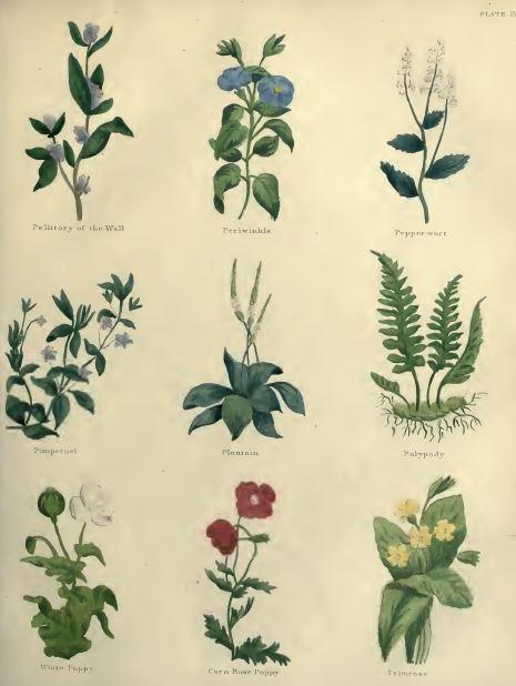 Medicinal and Culinary Herbal Library